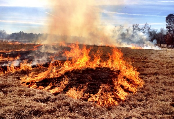 Burning the brush before clearing